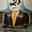 Avatar de face_te_ipsum