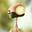 Avatar de pedrogarcia